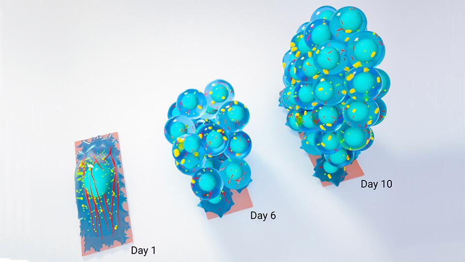 20180710 stem cell.jpg