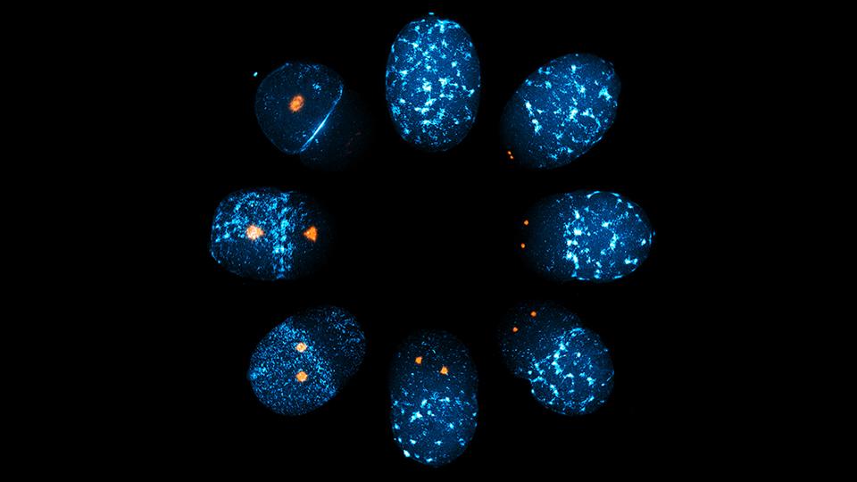2019 0517 Motegi cell.jpg