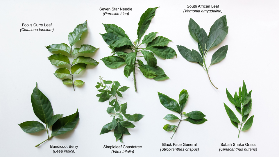 7 Leaves (with names).jpg