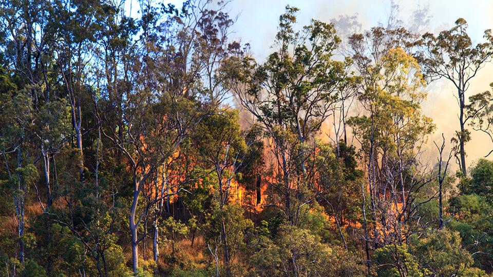 Bushfire in Australia.jpg