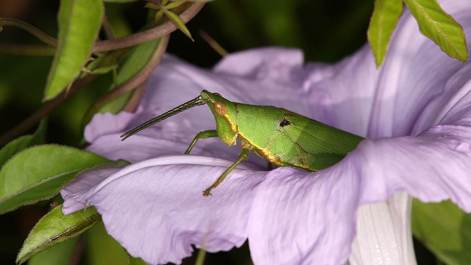 Grasshopper_960.jpg