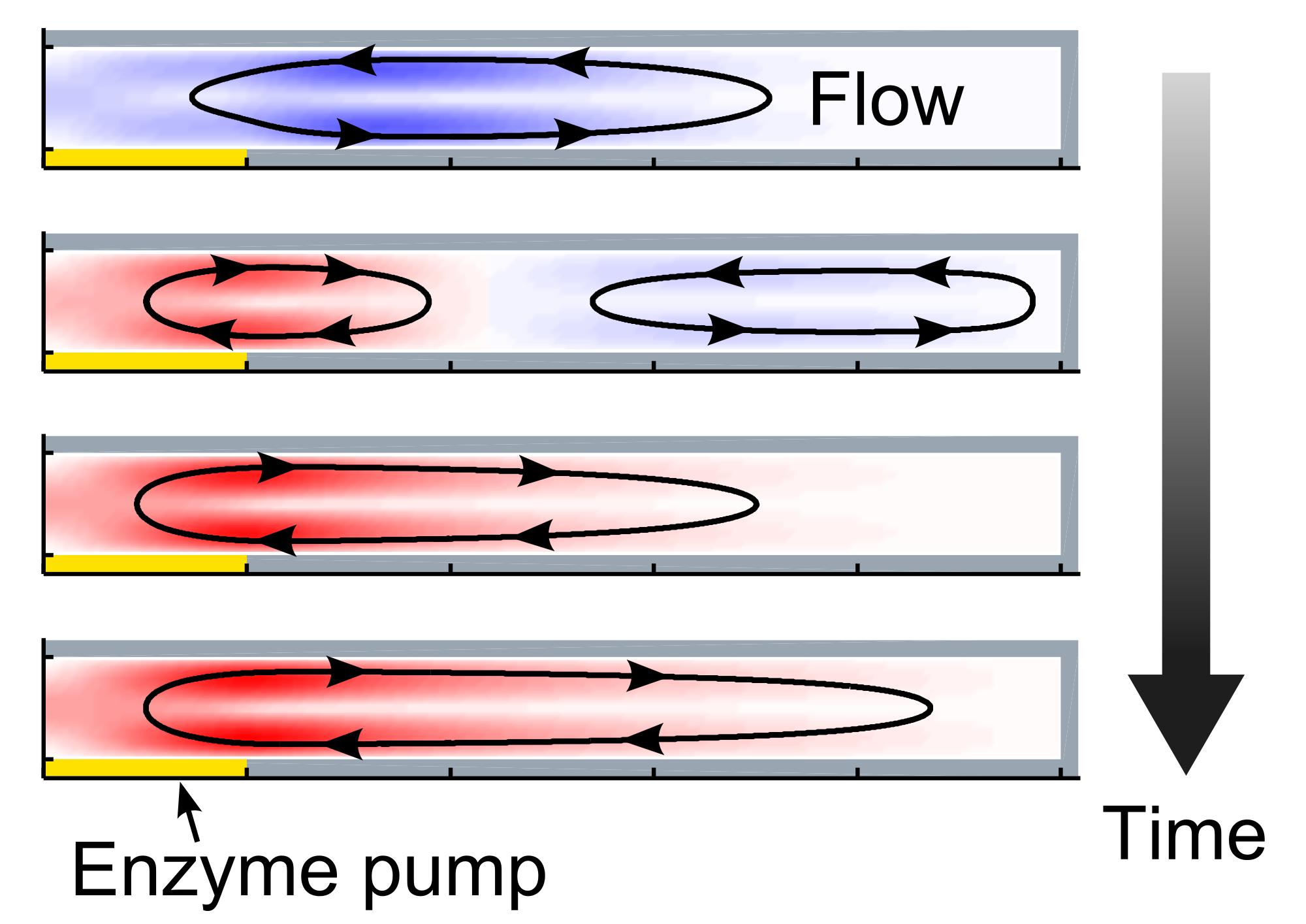 Enzyme Pump image Balazs Shum