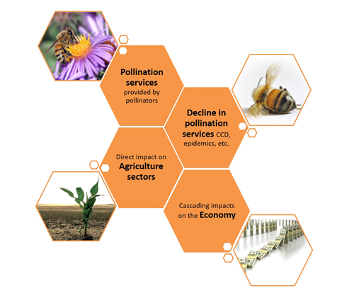 Vikas Khanna insect pollination bee graphic