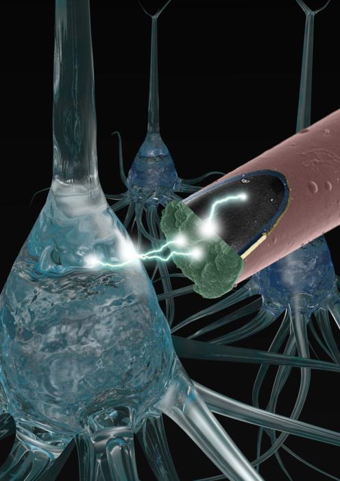 kozai-neuroelectronic-interfaces