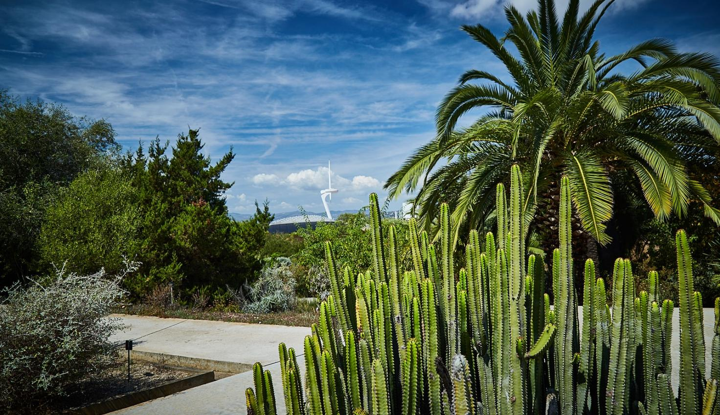Photo Jardin botanique Montjuïc