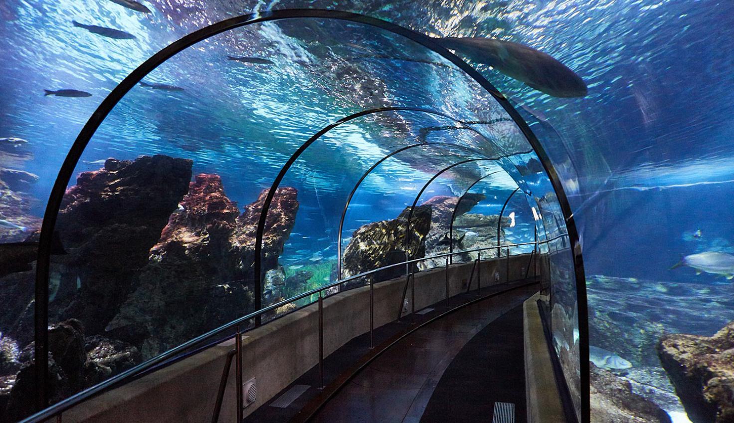 Photo Barcelona Aquarium
