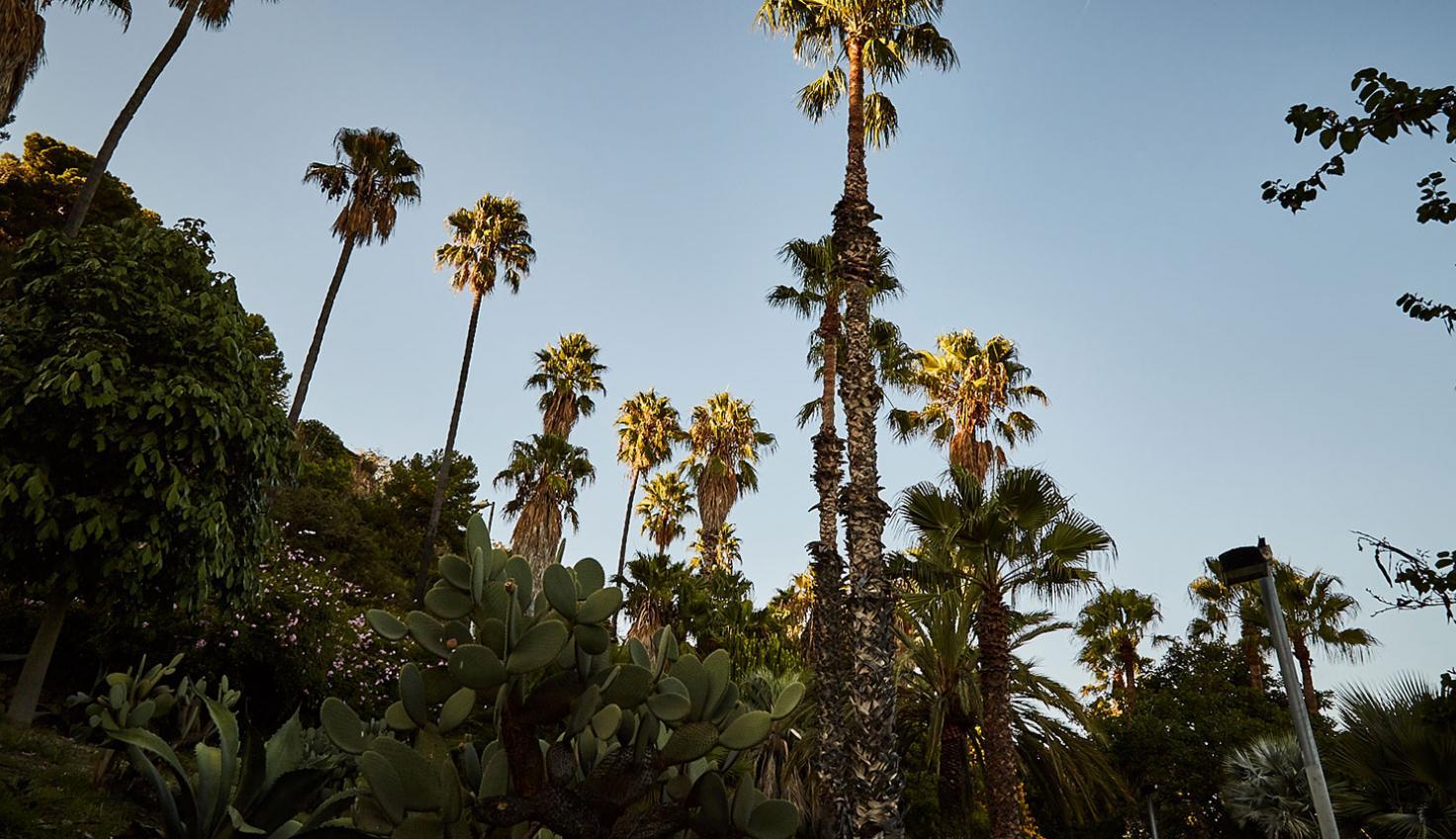 Foto Jardins de Mossèn Costa i Llobera