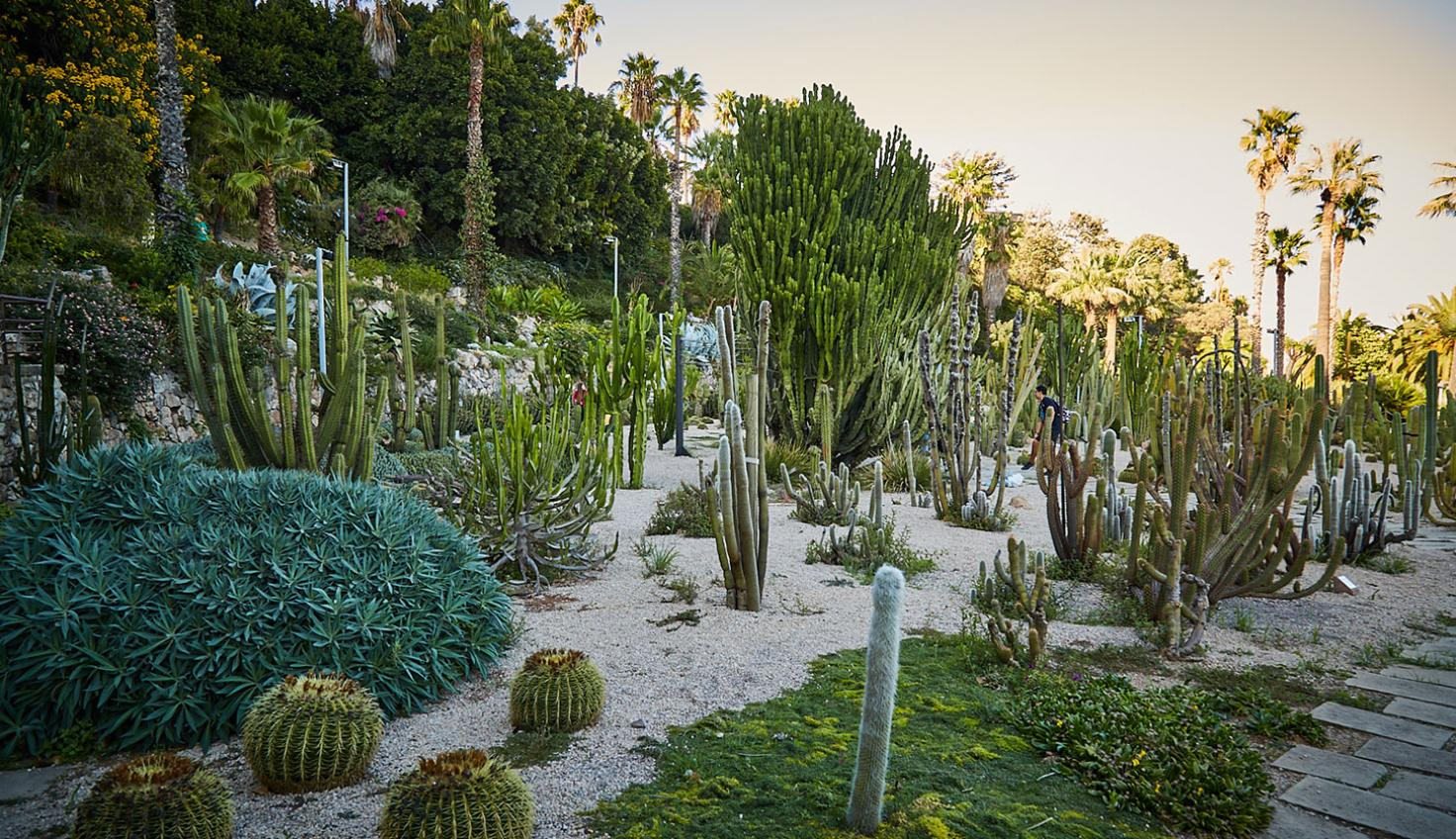 Photo Costa i Llobera Gardens