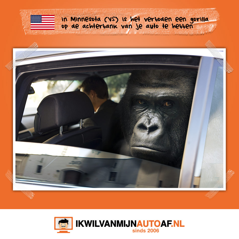 Geen gorilla in je auto