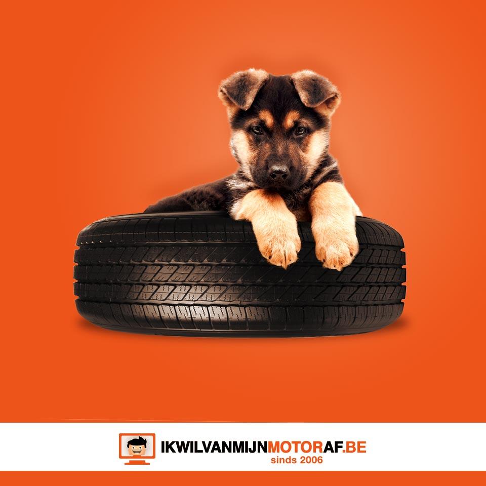 Motorband voor de hond