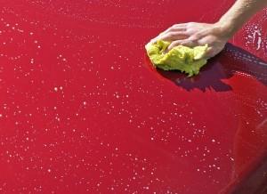 Verwijder boomhars met een natte spons