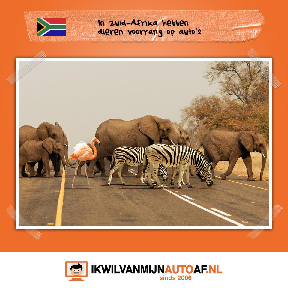 Dieren in Zuid-Afrika hebben voorrang