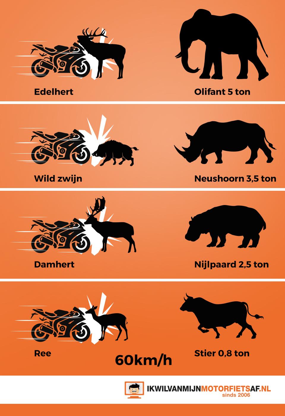 wildaanrijding