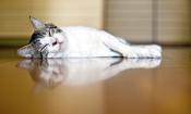 Pet insurance premiums can double as your pet ages