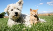 Most cat and dog owners go without pet insurance