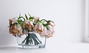 Problems with online flowers for a fifth of buyers