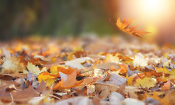 Best leaf blowers for autumn 2017