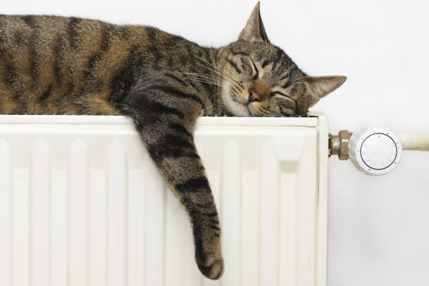 Cat sleeping on a radiator