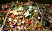 UK households waste 7.3 million tonnes of food a year