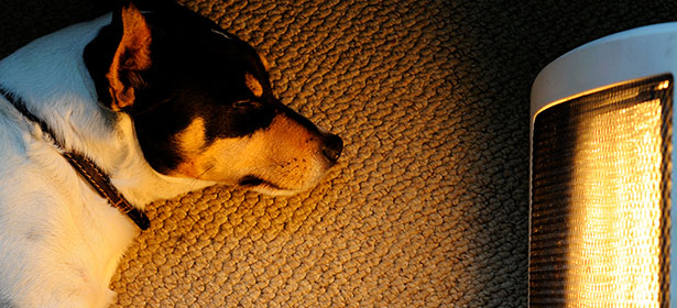 Dog laying on carpet, by electric heater. Dog looks like a Jack Russell.