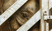 Animal welfare: What travel agents aren't telling you