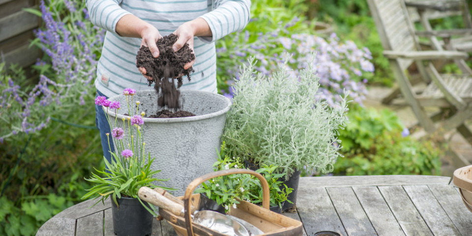 Which? finds the best way to keep your pots flowering all summer