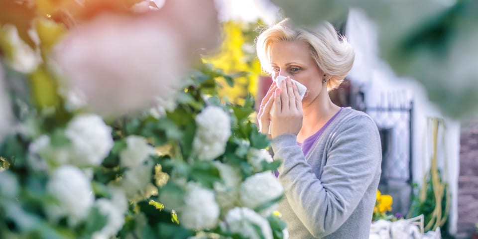Hay fever relief: how to get the best medicines for less