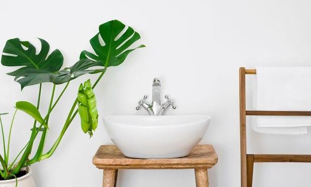 Bathroom basin and plant
