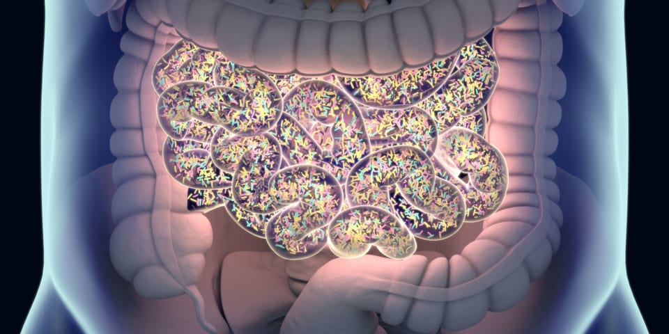 Top five gut health myths you need to know