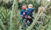 The cheapest place to buy a real Christmas tree in 2019