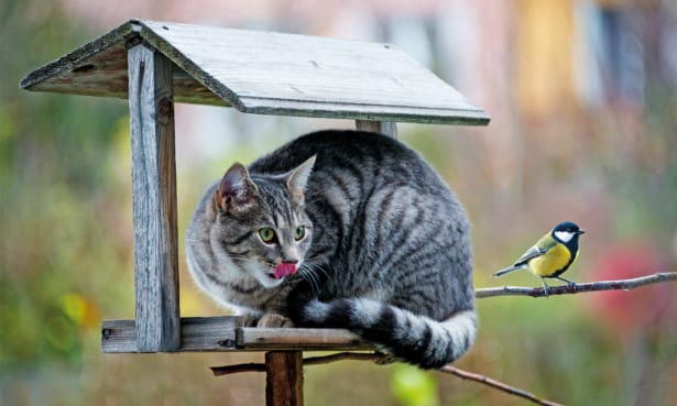howto stop cats and foxes fouling garden