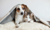 Peeved by pricey pet insurance premiums?
