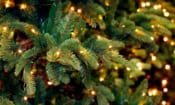 These Christmas tree lights – bought online at AliExpress, eBay and Wish – could catch fire or electrocute you