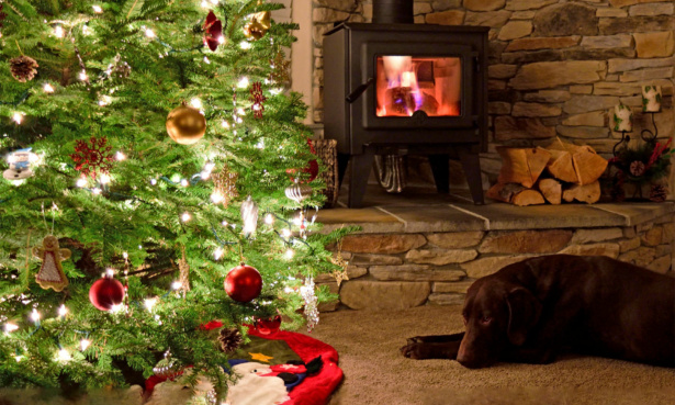 Wood-burning stove with a Christmas tree and black dog in front of it