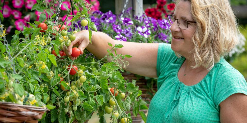 Easy veg to grow in pots