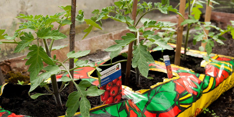 Best new grow bags for summer veg