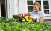 Cheap hedge trimmers for your summer gardening