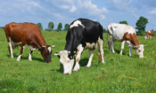 Red Tractor, RSPCA Assured and organic meat: what's the difference?