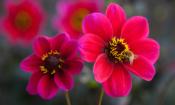 Top gardening jobs for September
