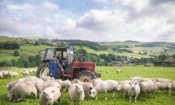 Brexit trade deals: how UK food standards compare to the world