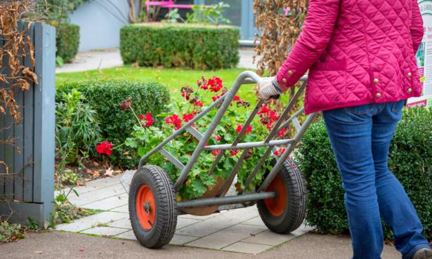 Bringing tender plants indoors