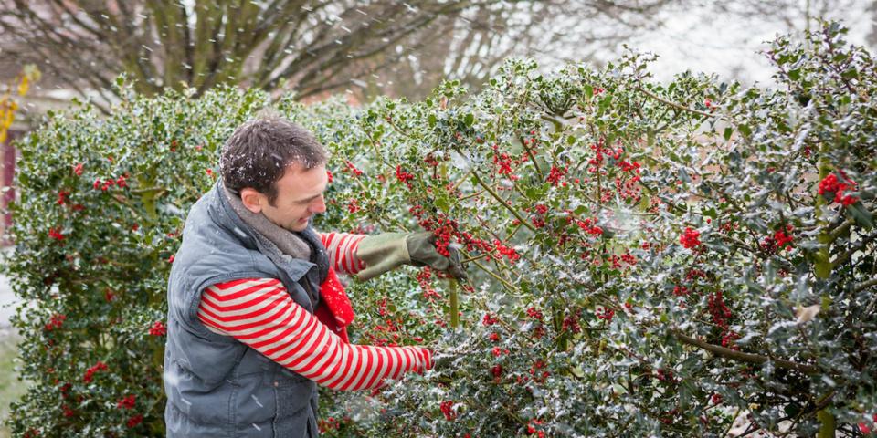 Top gardening jobs for December