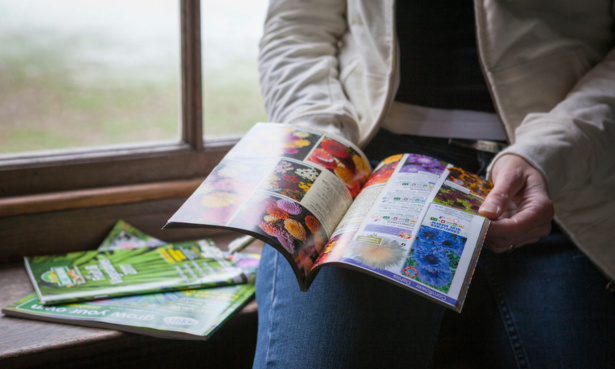 Reading seed catalogues