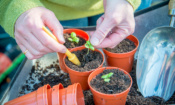 Which? finds the best composts for young plants