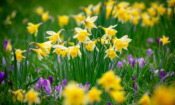 Top gardening jobs for March