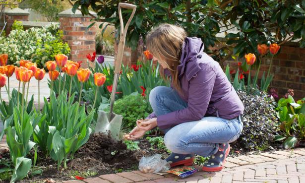 Planting summer-flowering bulbs