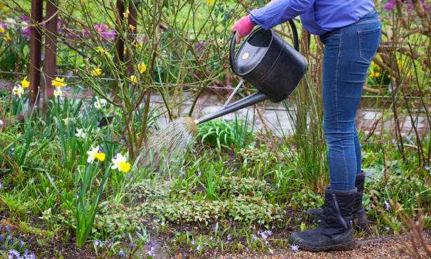 Water on biological control for slugs