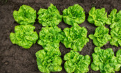 Sustainable shopping: four fruit and veg to look for in May and June