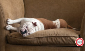 """'My """"hard-wearing"""" leather sofa is a dog's breakfast – and now the shop is bust'"""