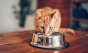 Cat food recalled over potential link to serious illness